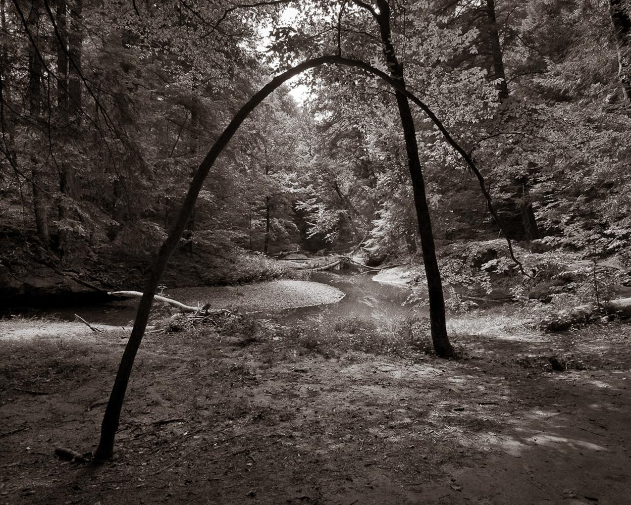 """Bending Tree"", Hocking Hills State Park, OH, 2013"