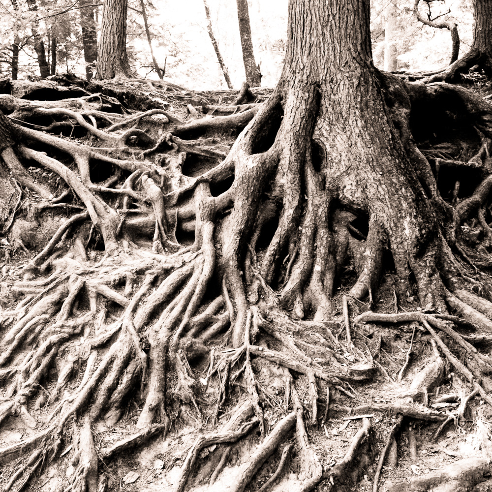 """""""Roots"""", Hocking Hills State Park, OH, 2013"""