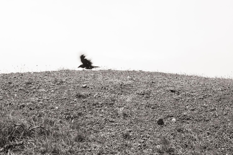 """Crow"", The Lost Coast, CA, 2014"