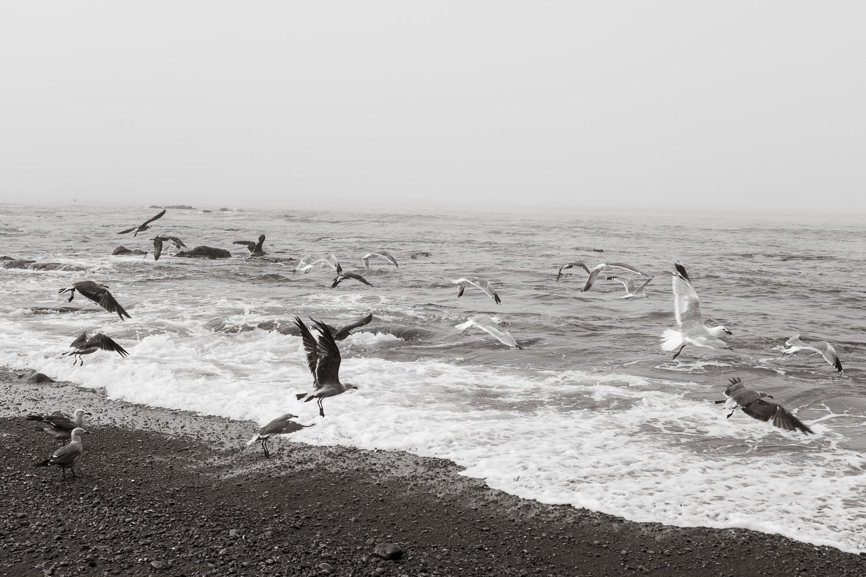 """""""Gulls"""" The Lost Coast, CA, 2014"""
