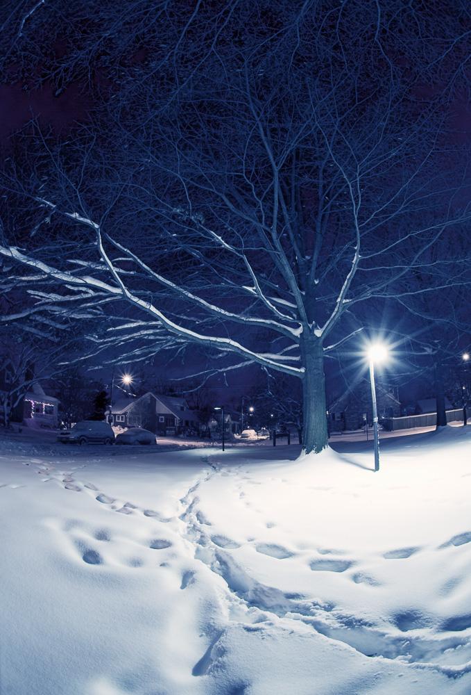 """Tracks in the Snow"", Charles W. Hill Park, Del Ray, VA, 2009"