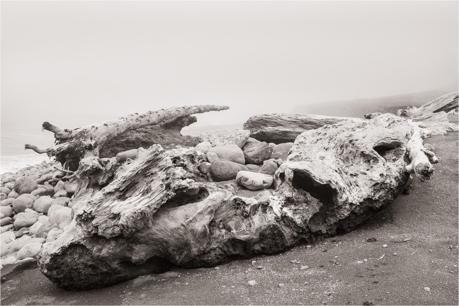 20140729_Giant-Driftwood_Lost-Coast.jpg
