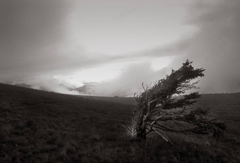 """Windswept Tree"", The Colorado Trail, 2001"