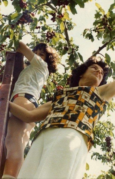 Okanagan fruit picking during summer holidays.