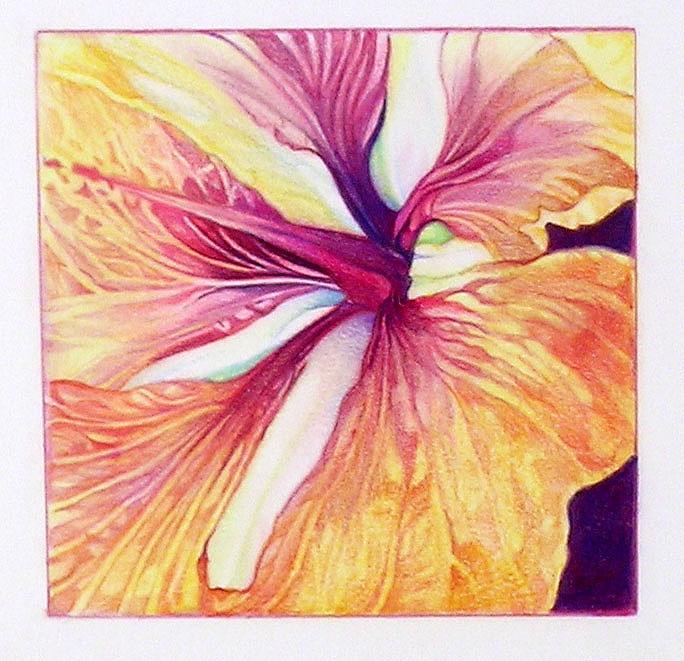 Hibiscus_Detail.jpg