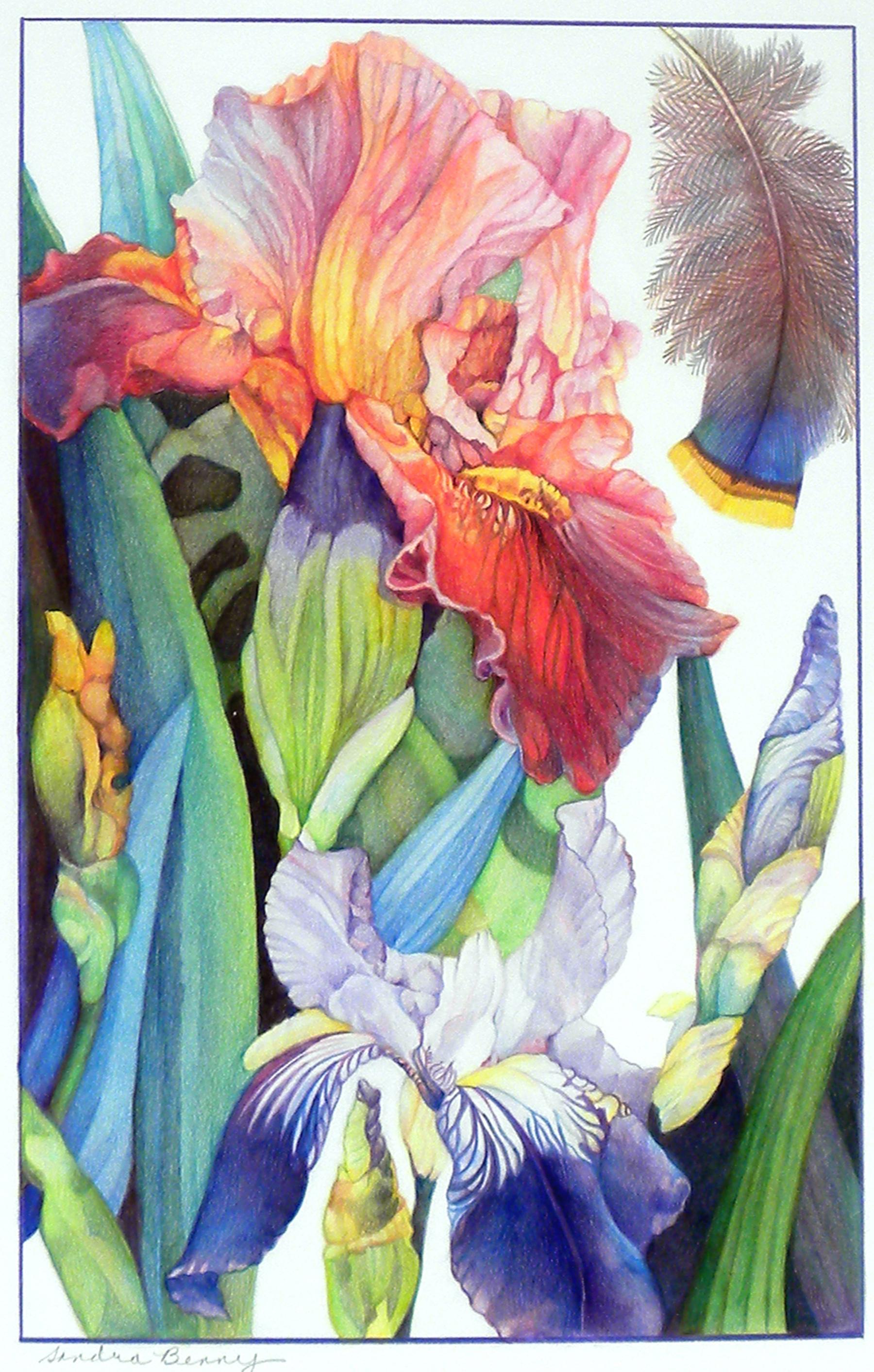 Red-Orange Iris 17 x 11 in. color pencil .jpg
