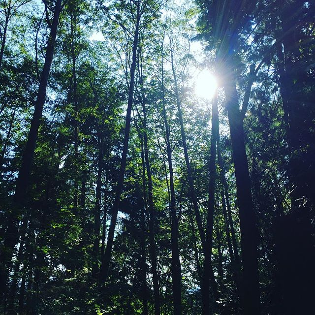 Getting inspired from my roots .Sunlight thru the pines of Beautiful British Columbia  #Vancouver #pinetrees  #gscout #inspiration #sunlight #freshair #familytime