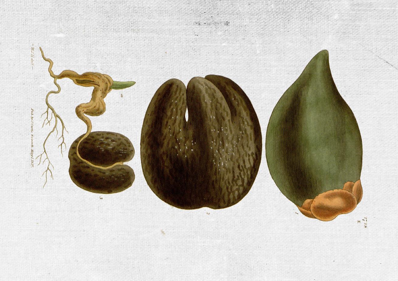 COUNTRY OF ORIGIN: SRI LANKA    KEY BENEFITS: moisturising anti aging, anti microbial.    REGENERATING BALM, ANTI AGE MOISTURIZER, SKIN CONDITIONER