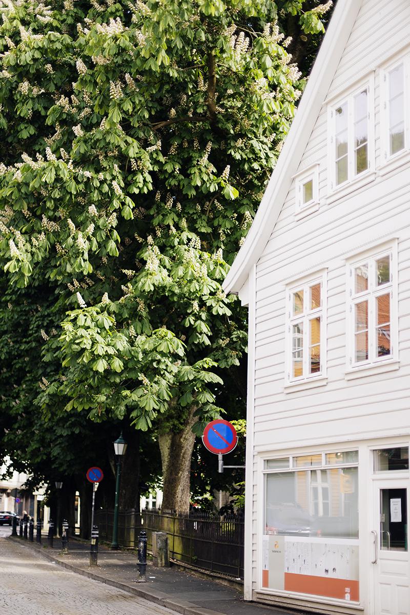Cocoon_Cooks_Bergen_Norway_60