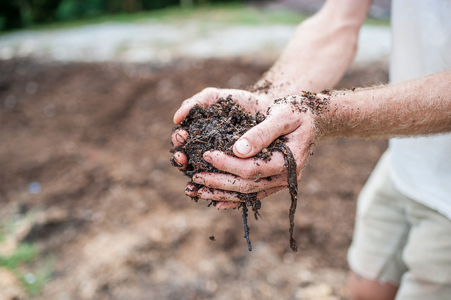 Did you know you can have your soil tested for free at Soil Festival 2018?   Click here   for step-by-step instructions on collecting your soil sample to bring for testing.