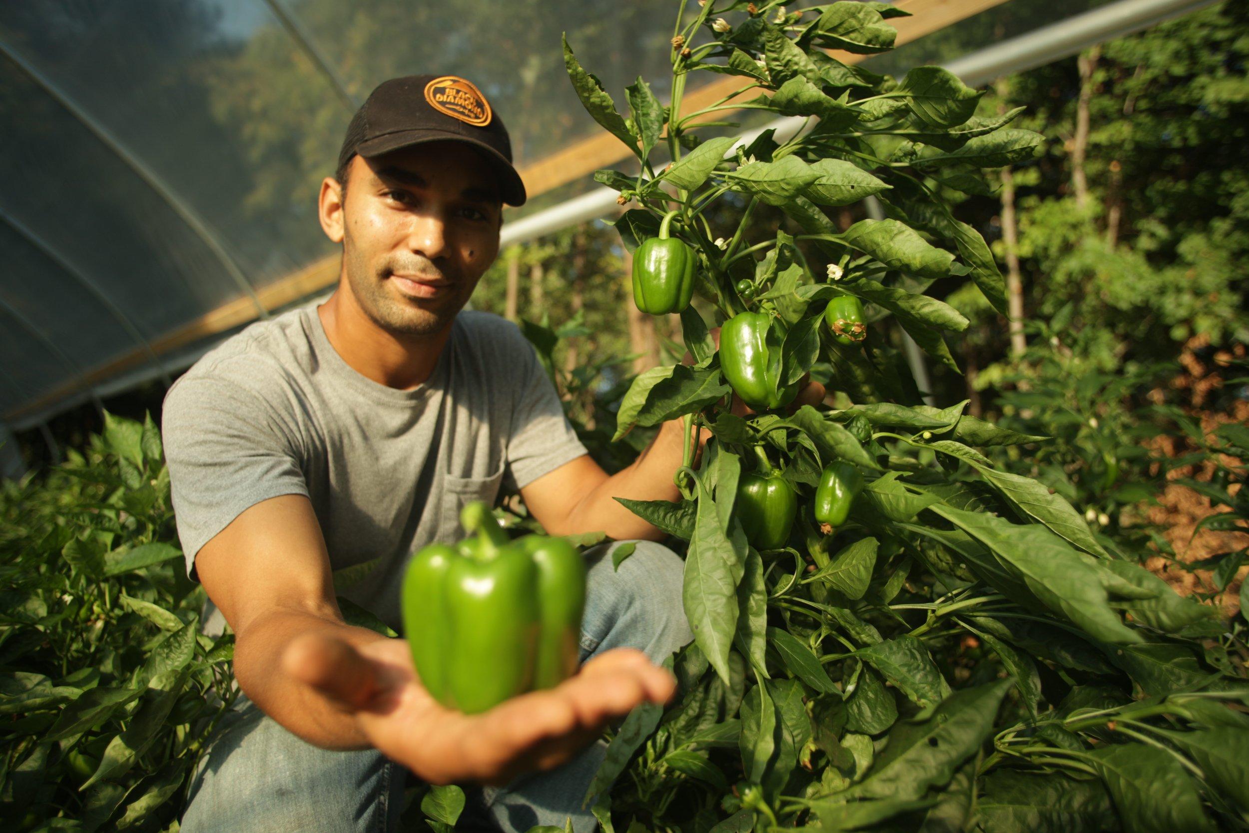 Urban Sprout Farms.jpg