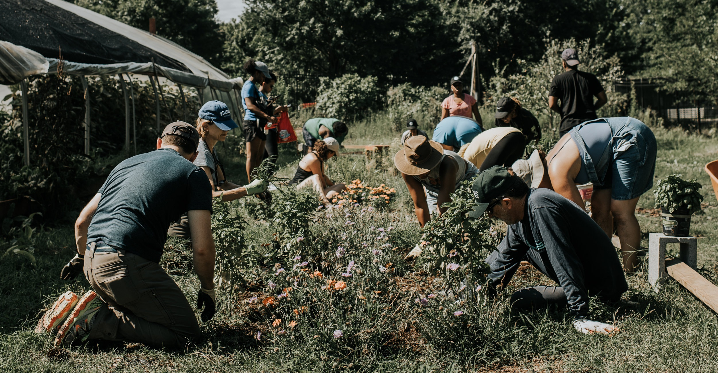 Let's Grow Together - There are 300 community gardens and 50 urban farms in metro Atlanta. We help these spaces thrive.