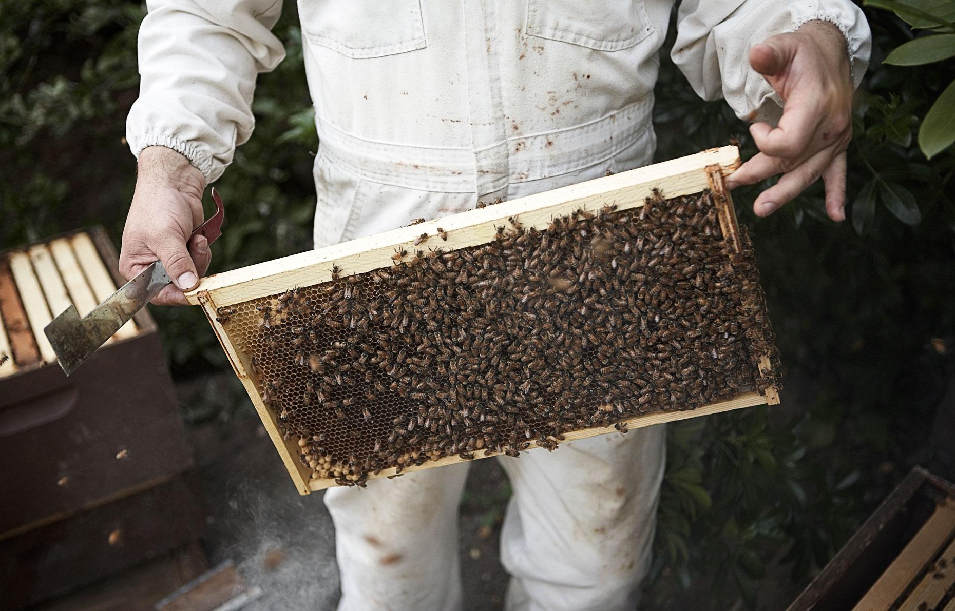 HoneyBees_v2.jpg