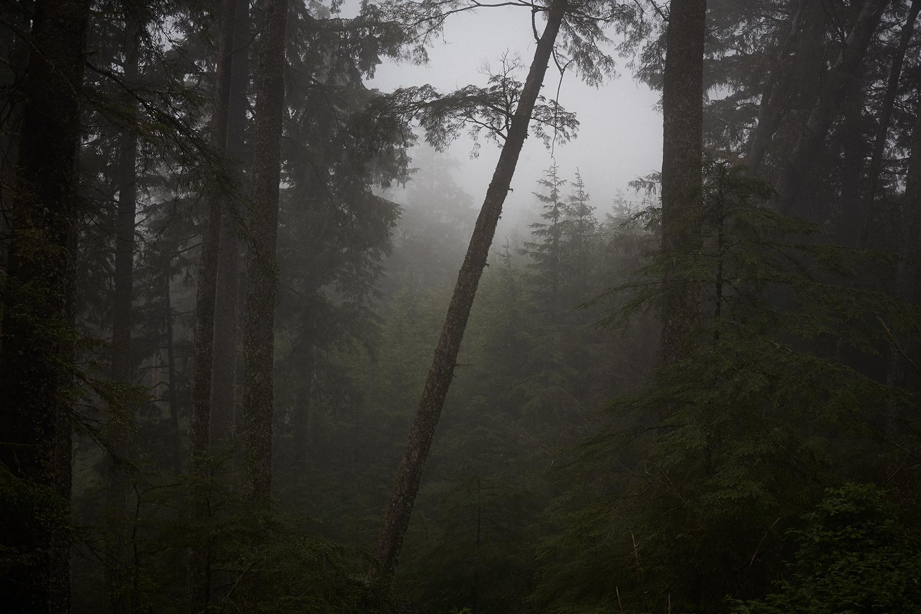 Kehoe_RainForest_MG_1515.jpg