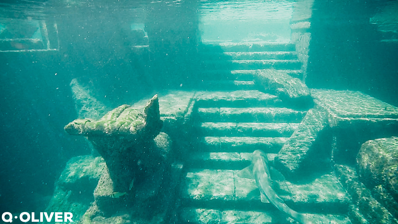 Swim with Sharks Atlantis