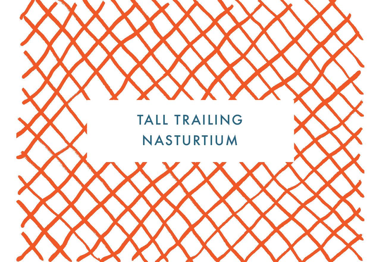Tall Trailing Nasturtium