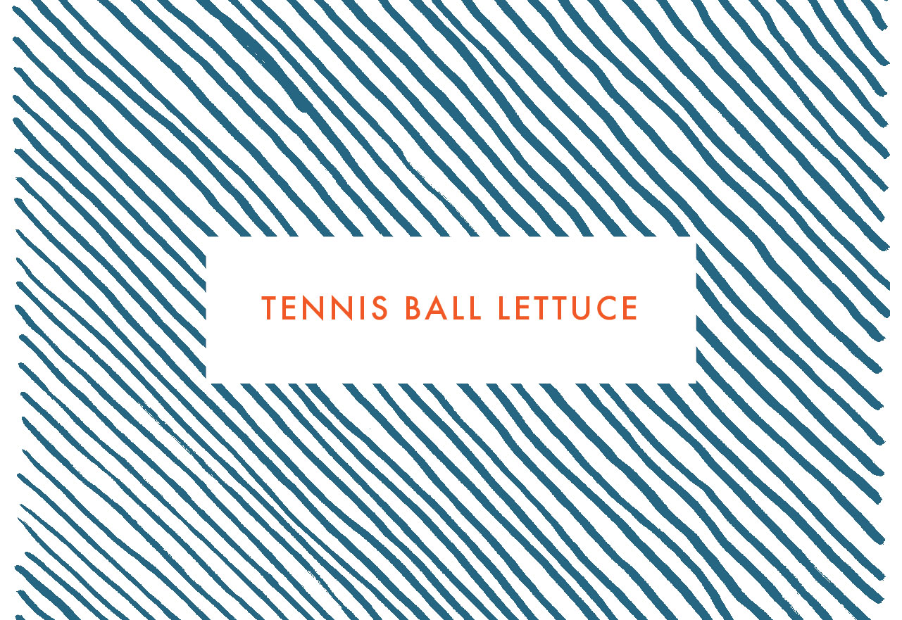 Tennis Ball Lettuce