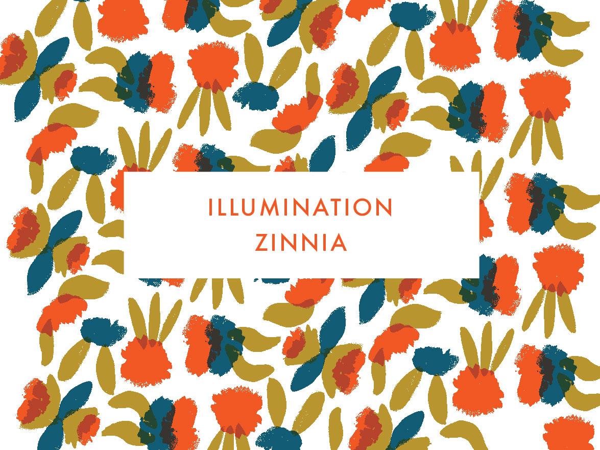 Illumination Zinnia