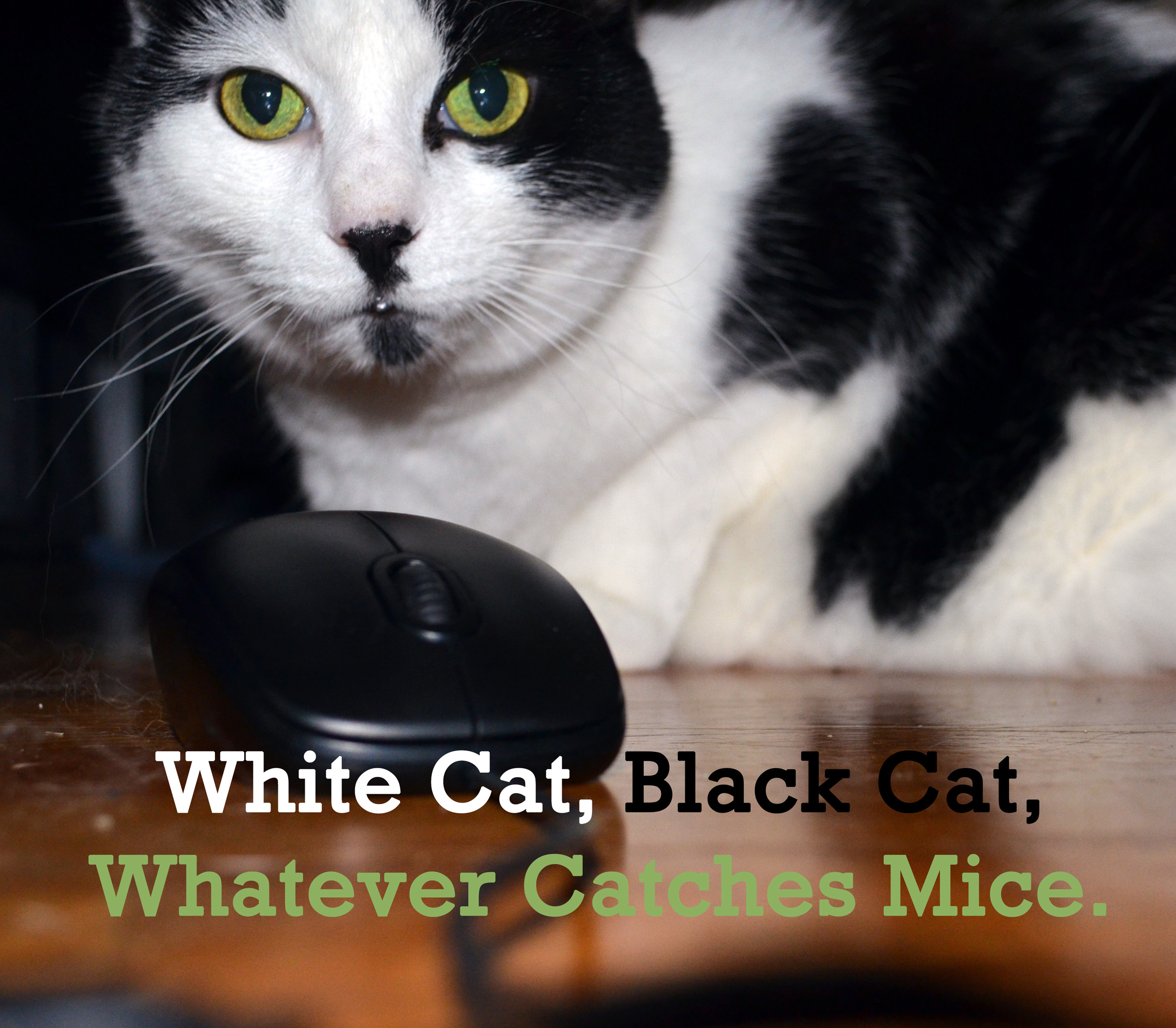 But am I a white cat with black spots or a black cat with white spots?