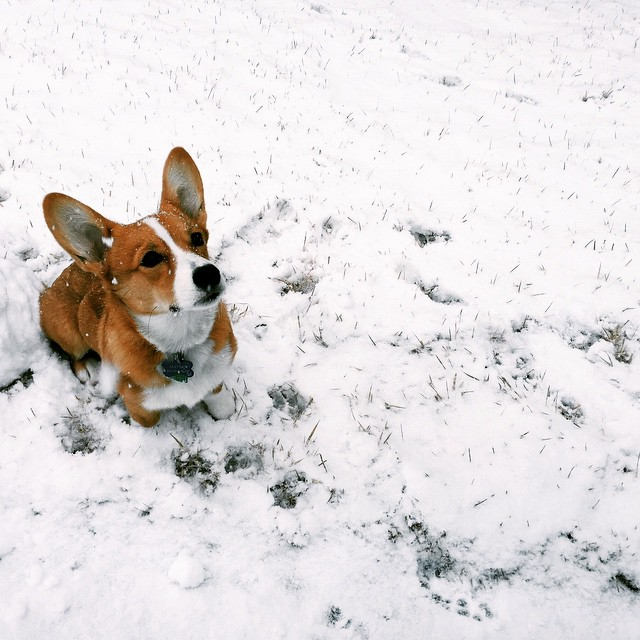 Maybie in the snow. She loved it, I hate it.