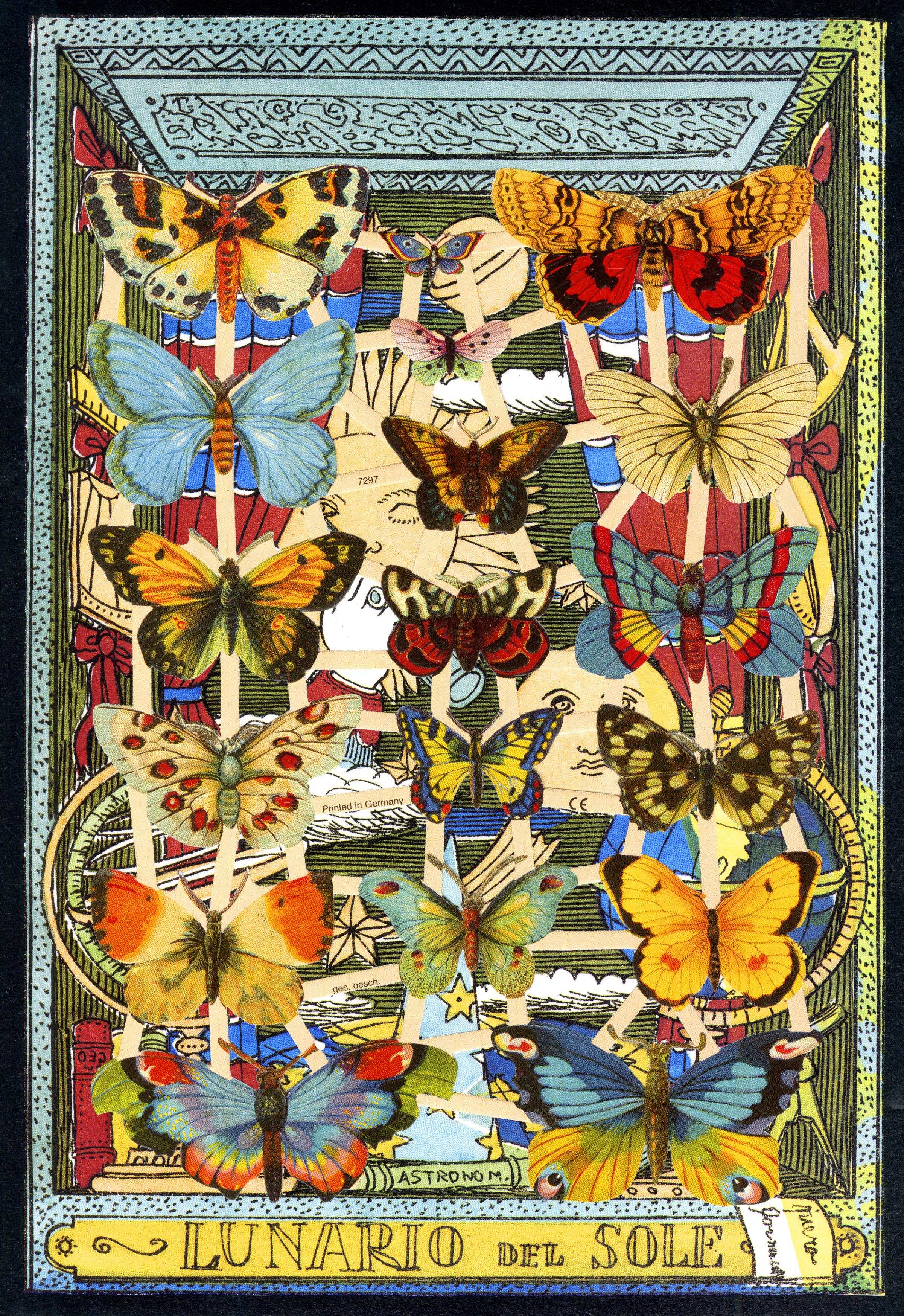 Butterflies forn.jpg