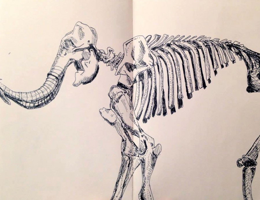 Mammoth Skeletal Structure