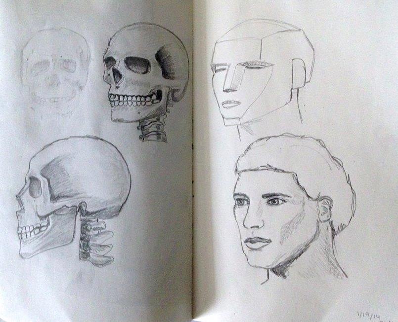 Human Anatomy Studies