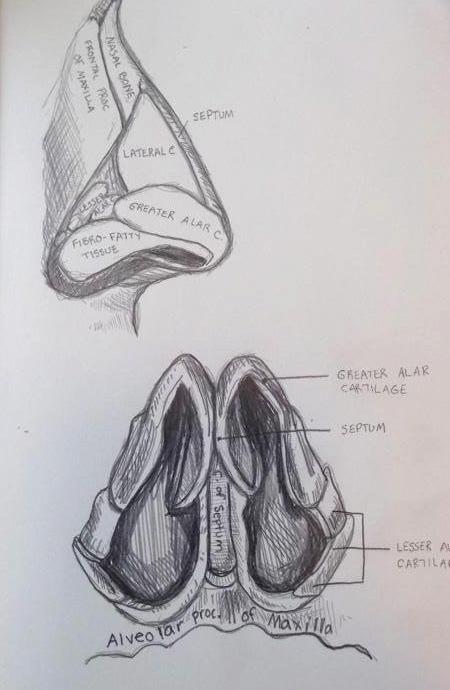 Human Anatomical Study I