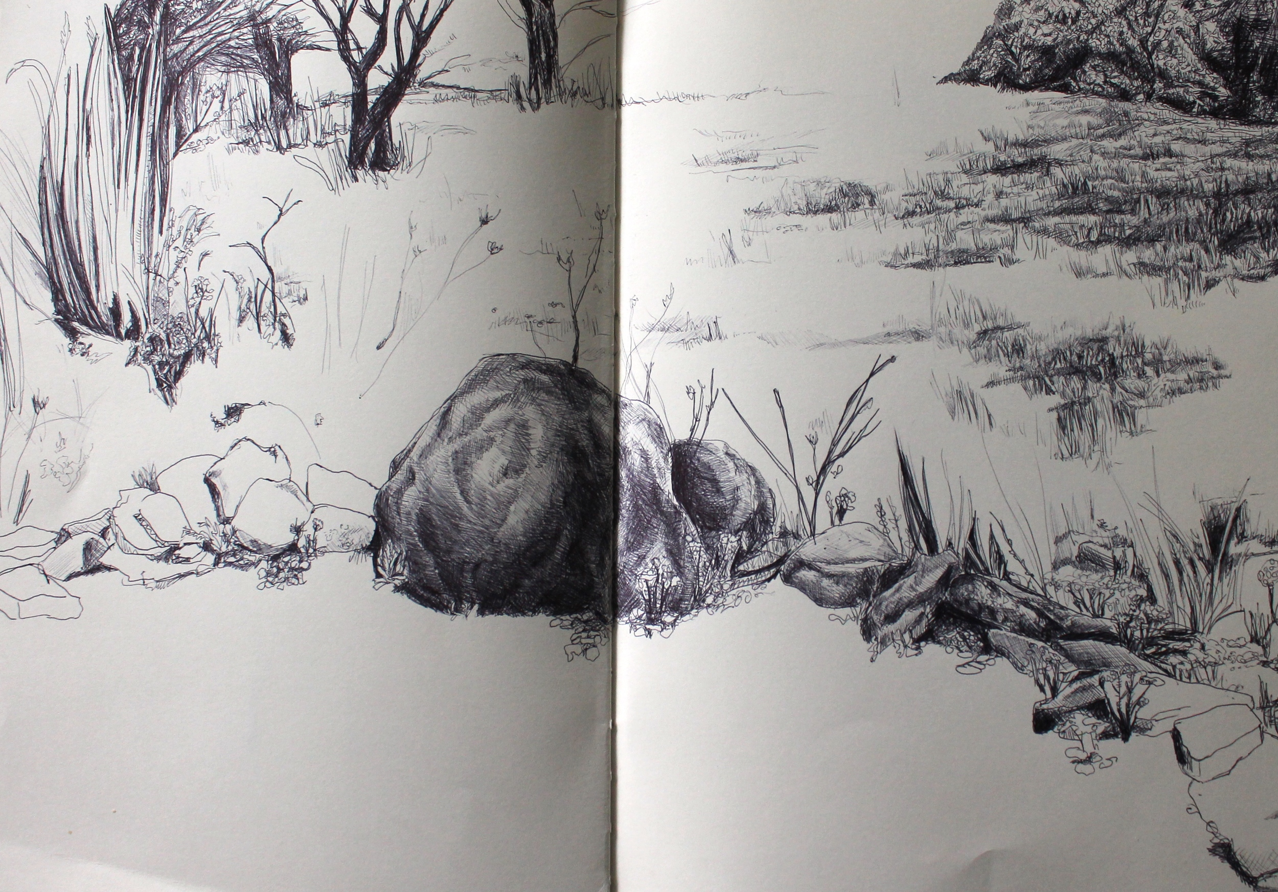 Tanglewood Nature Center pre-drawing
