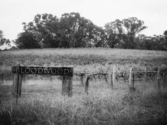 The vines of Bloodwood, Orange, NSW
