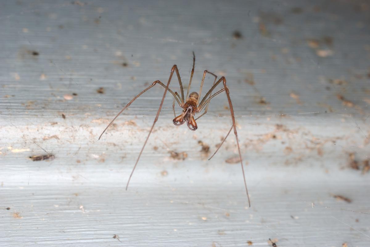 aug_spider.jpg