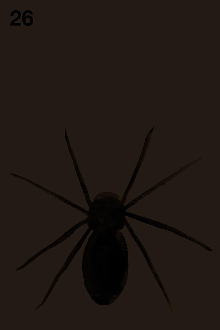 spider#26.jpg