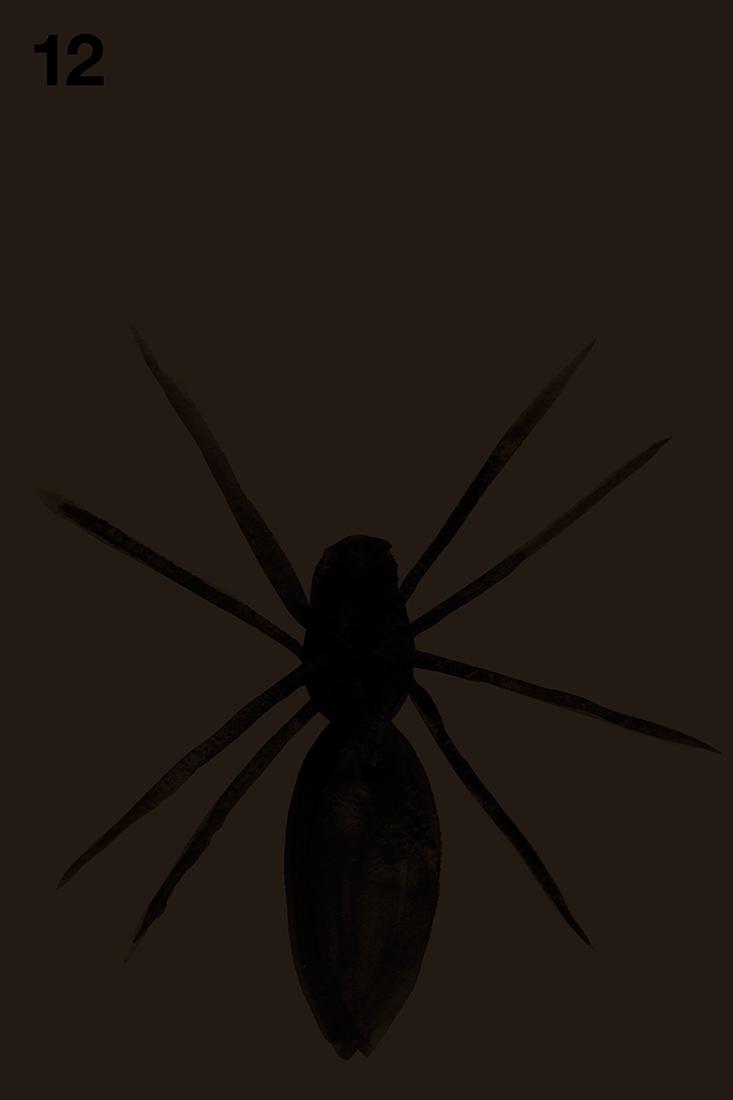spider#12.jpg