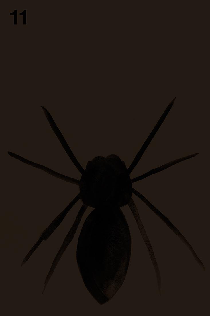 spider#11.jpg
