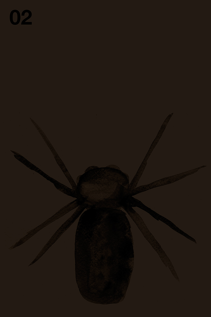 spider#02.jpg