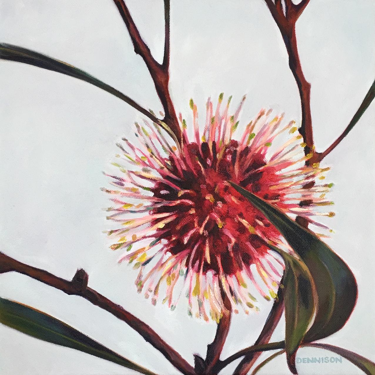 Pincushion Hakea   Oil on Canvas, 30cm x 30cm
