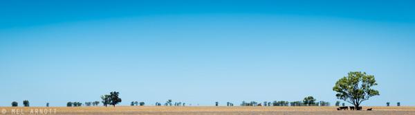 Mel-Arnott-Country-NSW.jpg