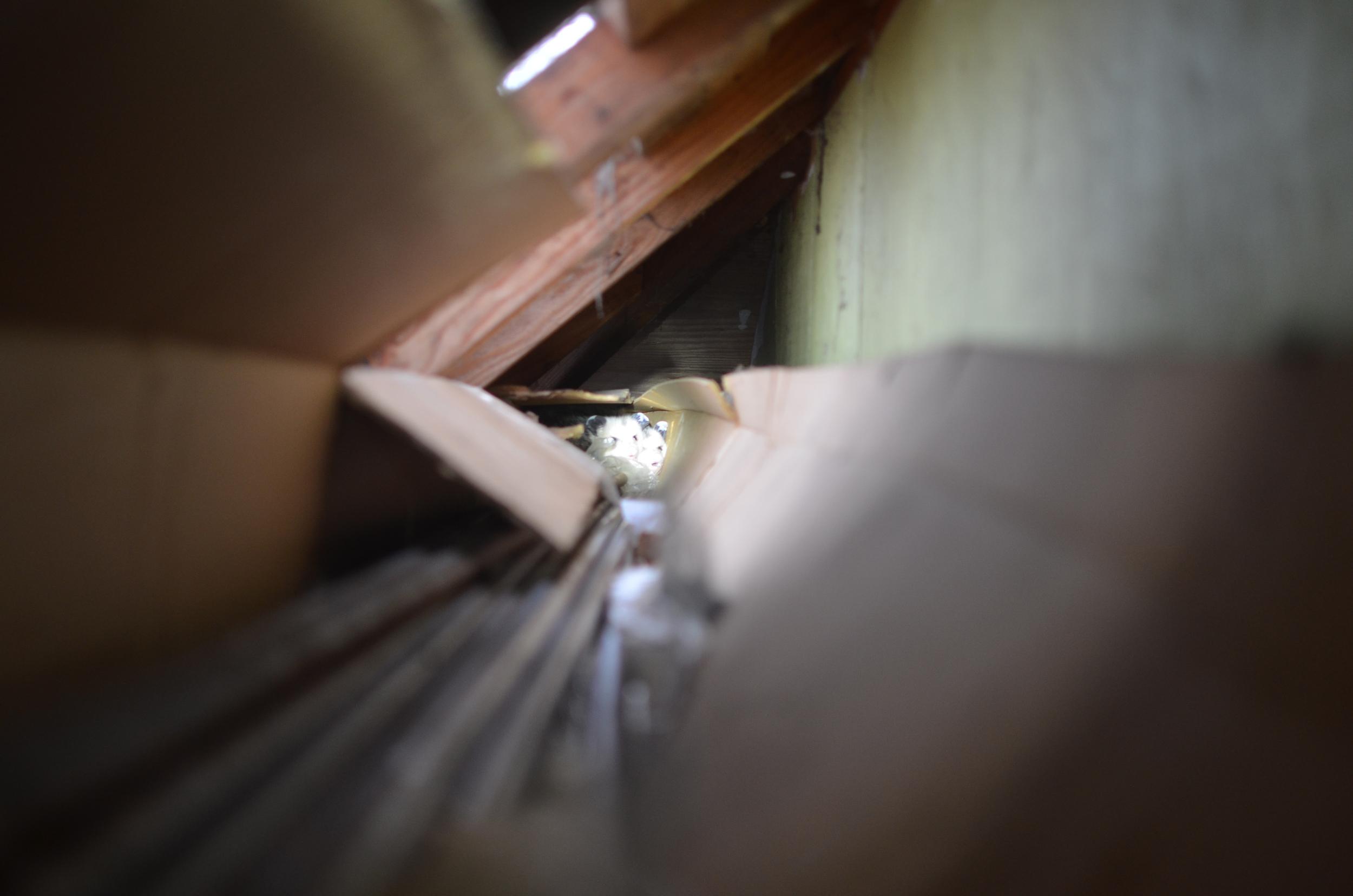 oposum.jpg