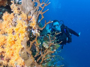 Great Underwater Shot