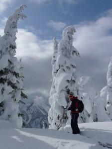 White Frozen Trees