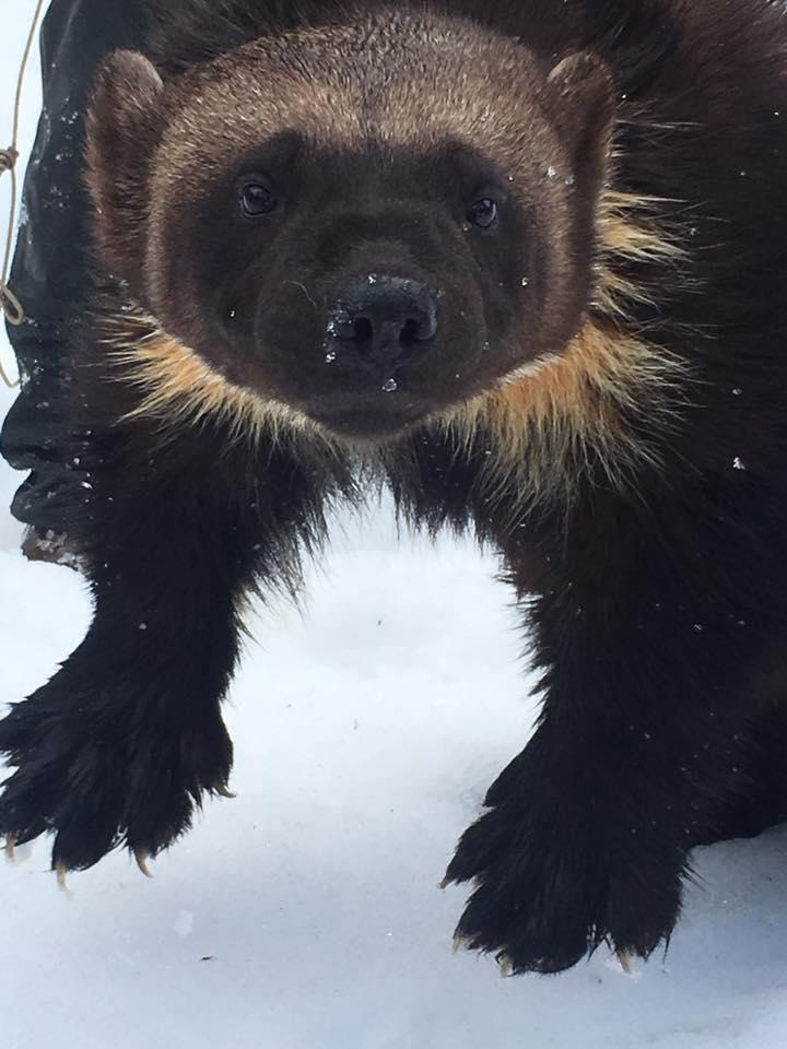 Alaska Land of Wow Tour (24).jpg