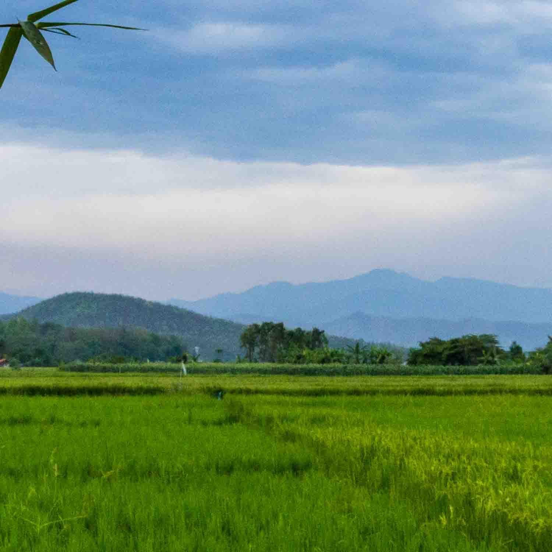 5. Farm View.jpg
