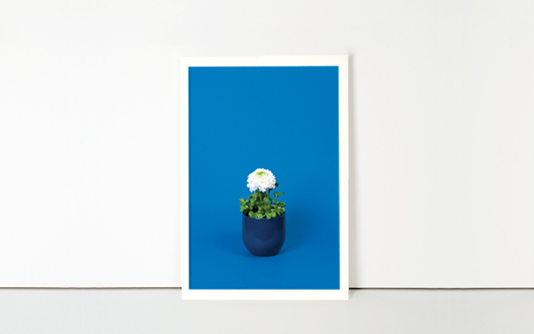 White Crowfot in Blue canvas - 25€