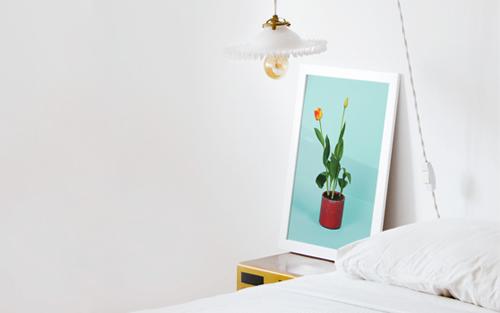 Daydream Tulip - From 25€