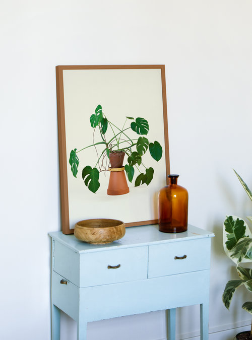 Crazy Monstera - 35€
