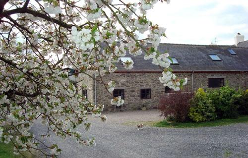 lanefarm_blossom.jpg