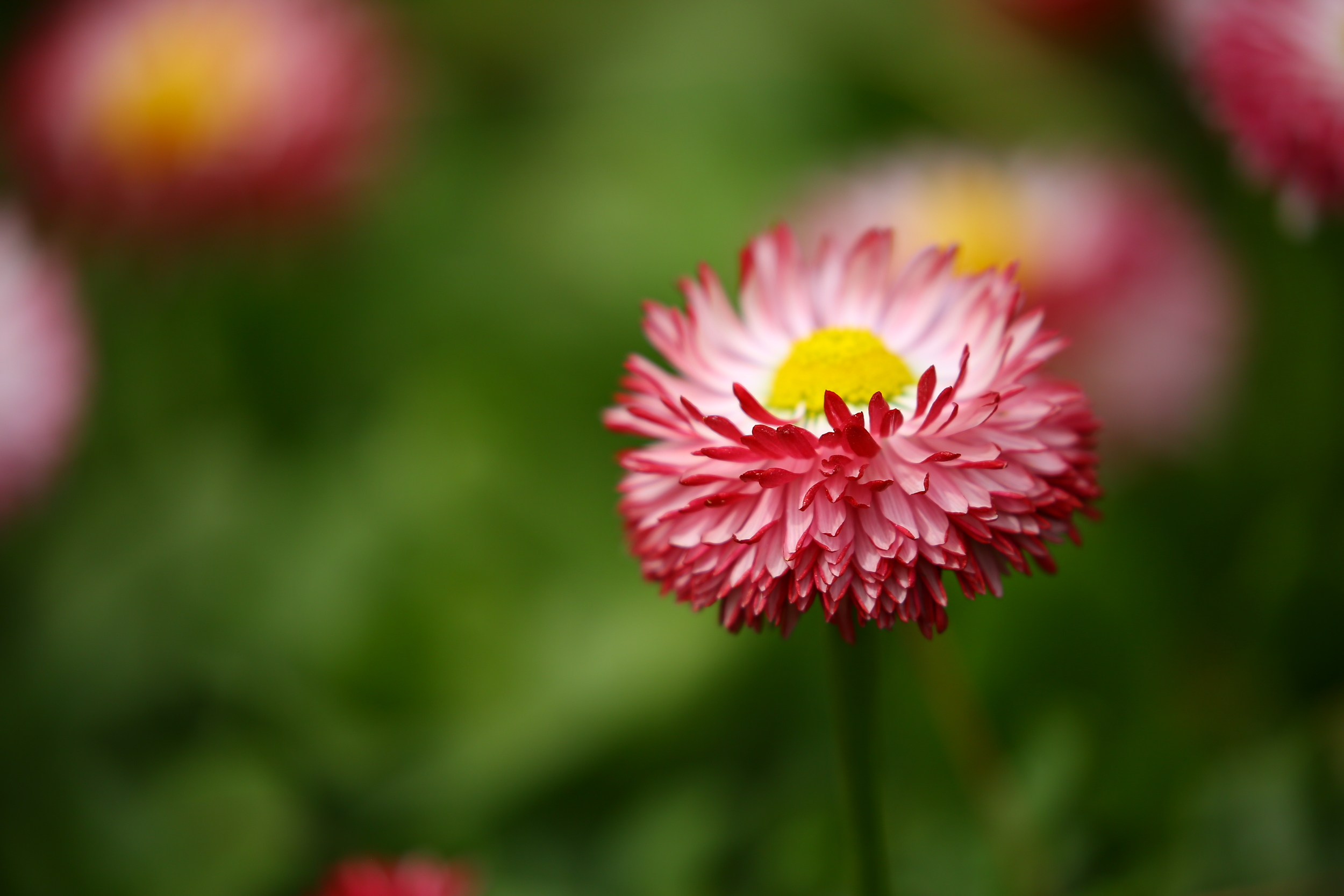 flower in focus