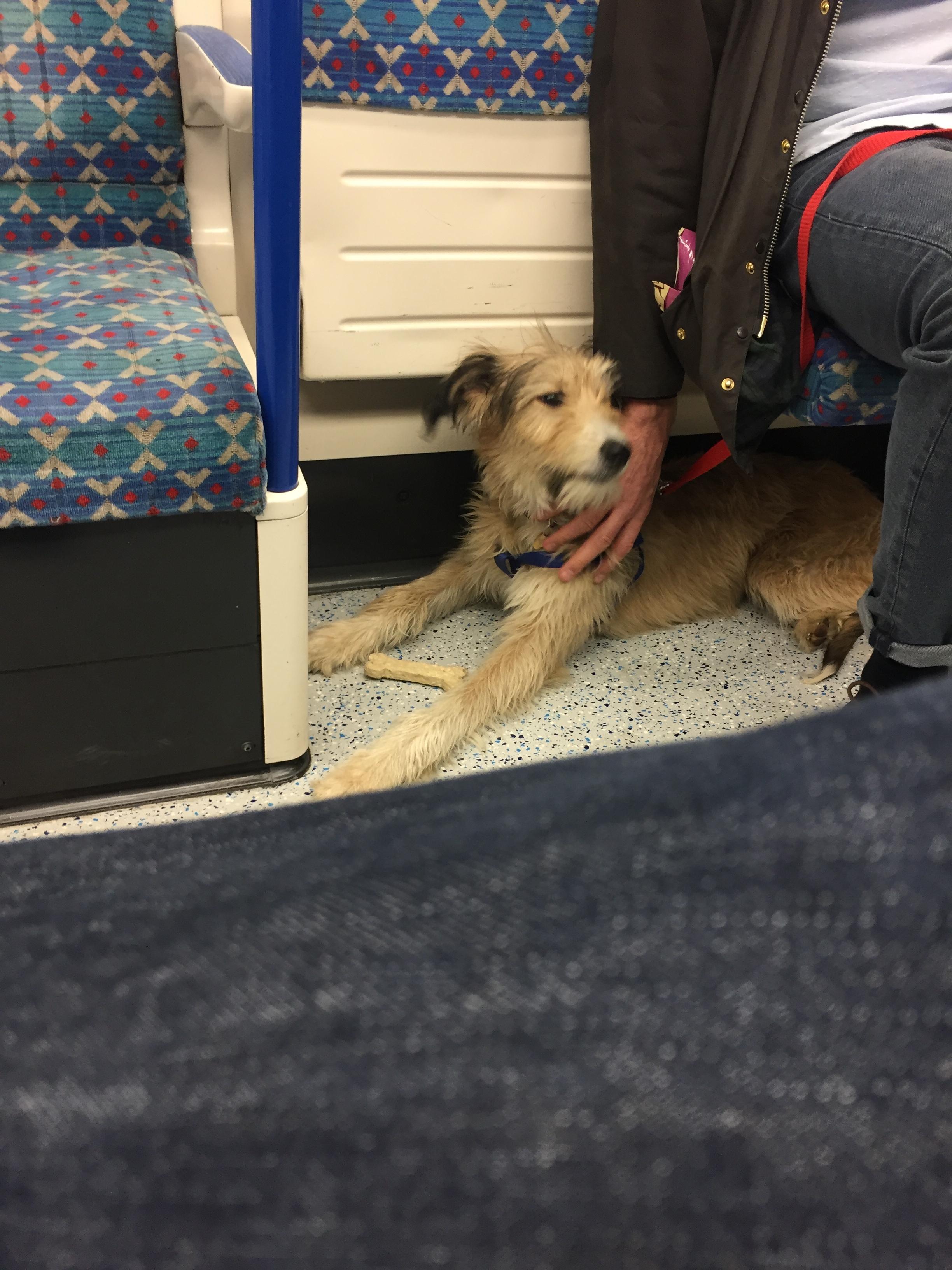 dog on the tube