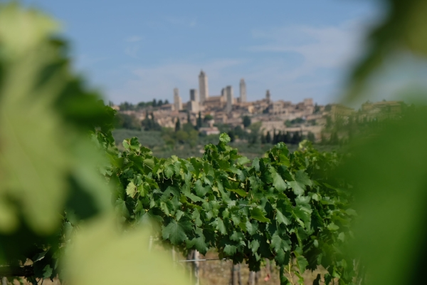 photo by Georgette Jupe during one of our San Gimignano Tours
