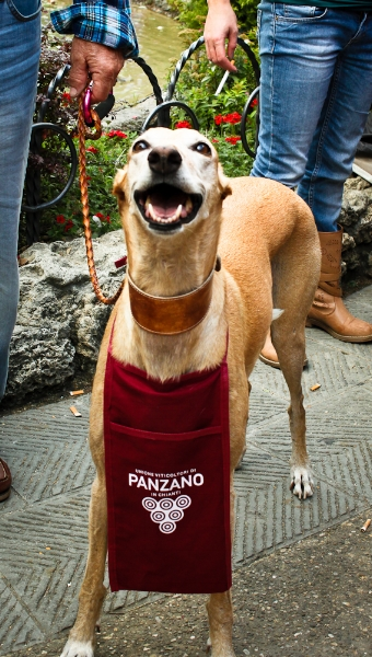 Wine loving pup in Panzano- one of Tuscany's most famous villages in Chianti Classico